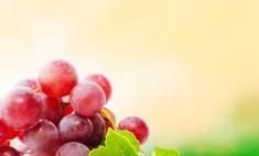 Виноград Лидия - ароматный дар осени