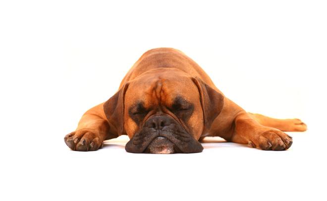 как собаки отходят от наркоза