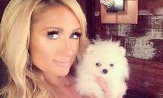 Пэрис Хилтон завела собаке аккаунты в соцсетях
