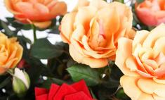 Цветы в горшках: что с ними делать