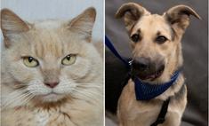Котопёс недели: кошка Клеопатра и пёс Дионис