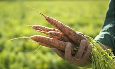 Под знаком «BIO»: что такое органическое питание