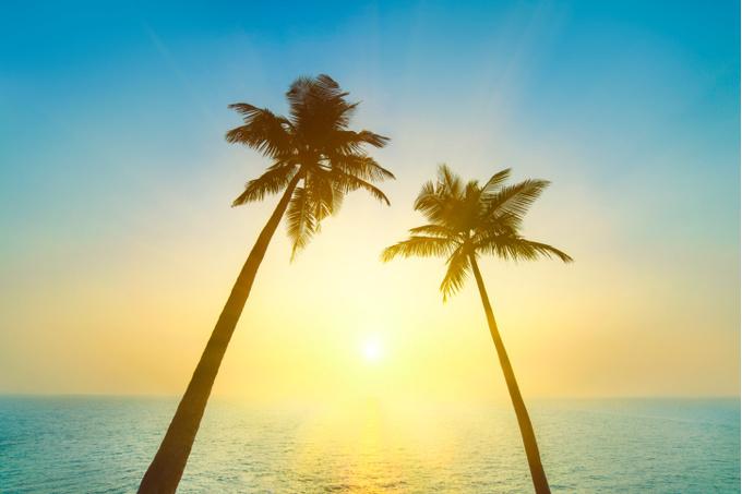Пальмы и солнце
