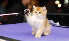 Лучше кошек могут быть только... кошки! Согласны?