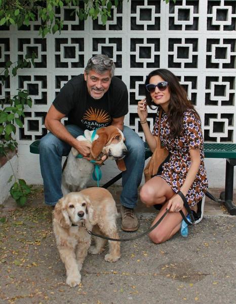 Джордж Клуни взял собаку из приюта