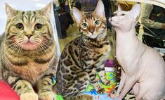 Милота дня: самые красивые котики Волгограда