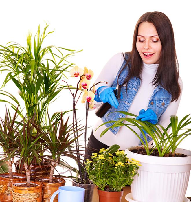 спасаем цветы