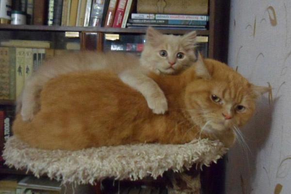 Коты и кошки Екатеринбурга