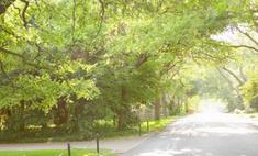 Деревья снижают уровень преступности