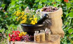 Рецепты народной медицины: успокоительные средства на травах