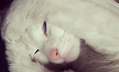 «Ми-ми-ми»: семь милых звездных котов
