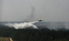 Площадь природных пожаров в России за сутки снизилась почти вдвое