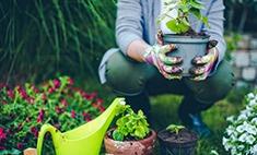 Садоводство как новая йога: 3 неожиданных факта