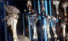 Названы номинанты кинопремии «Ника»