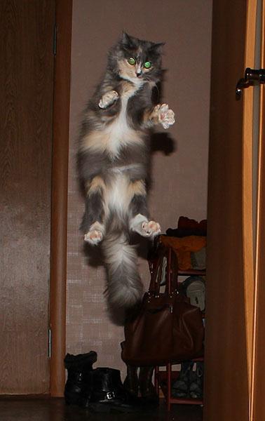 самые милые и забавные коты Тольятти