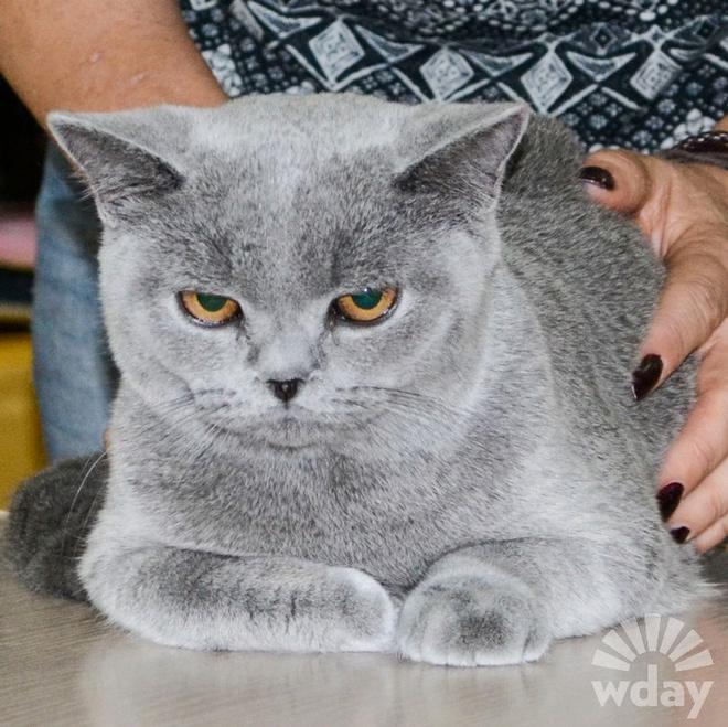 порода кошек