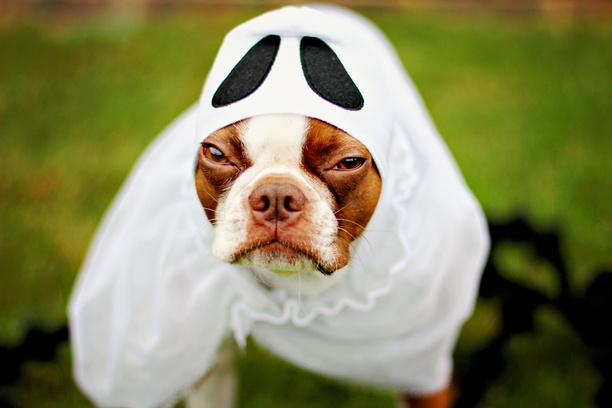 Картинки по запросу животные хэллоуин