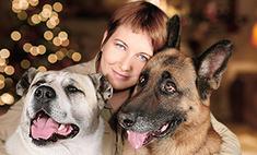 Как уберечь собак и кошек от новогодних петард