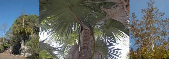 Редкие виды растений и животных