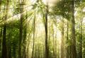 Прогулки на природе – профилактика депрессии