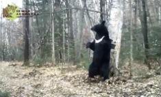 Позитив дня: медведь, который танцует тверк!