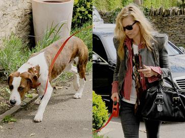 Кейт Мосс (Kate Moss) со своим псом Арчи