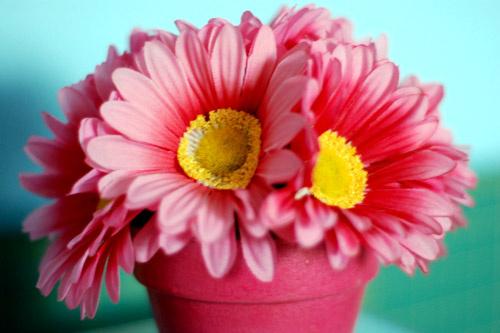 Цветные горшки и яркие кашпо для цветов – залог отличного настроения на весь день.