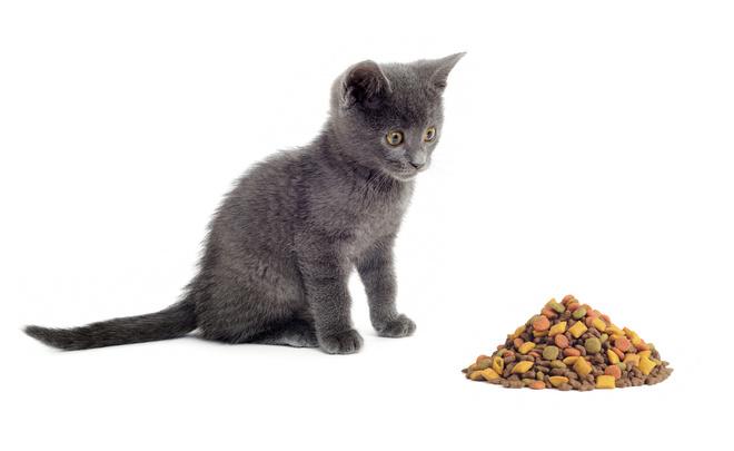 витамины для котят - трудности выбора