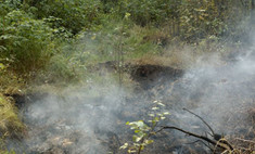 В Подмосковье начались торфяные пожары