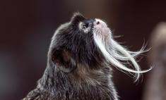 Кто составляет топ 25 необычных животных мира