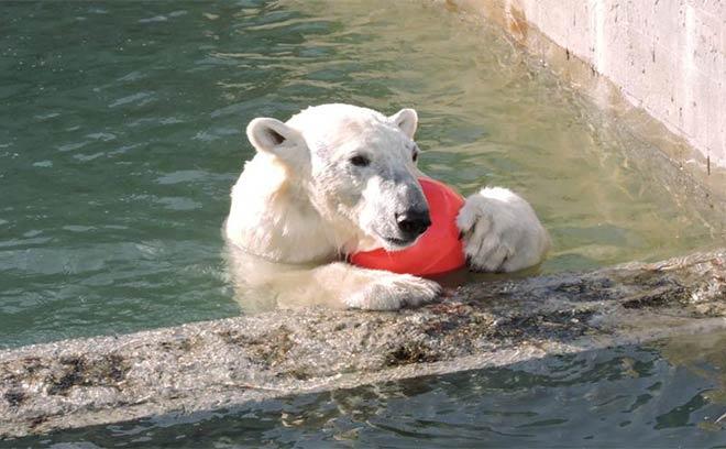 Ростовский зоопарк, зоопарк ростов +на дону, зоопарк +в ростове +на дону