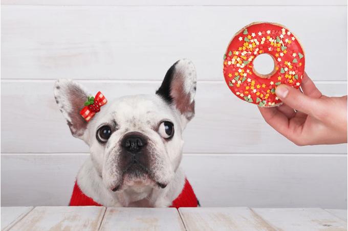 Собака смотрит на пончик