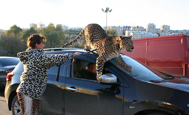 дрессировщица и леопард
