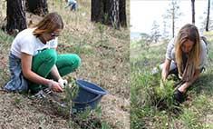 «Подари планете жизнь»: иркутяне сажали деревья в Кайской роще