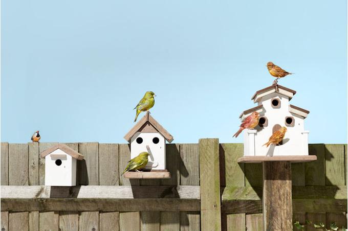 Птицы в домиках