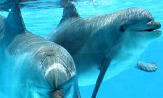 Питомцы Московского дельфинария начали тренировки