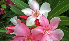 Советы, какие цветы хорошо держать дома