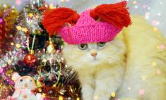 Котики, у которых в отличие от вас есть новогоднее настроение