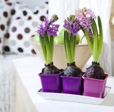 Комнатные растения в интерьере: приемы