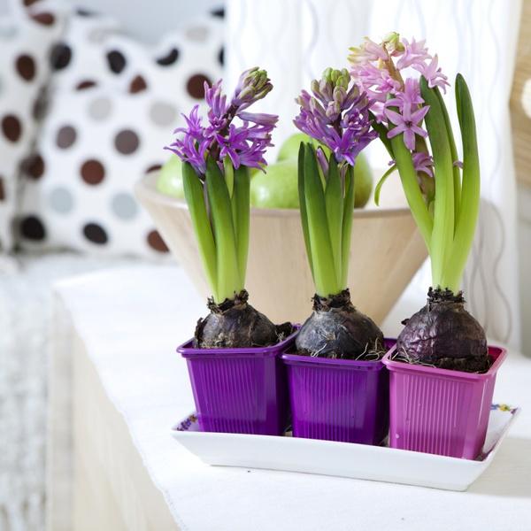 Как разместить цветы в комнате