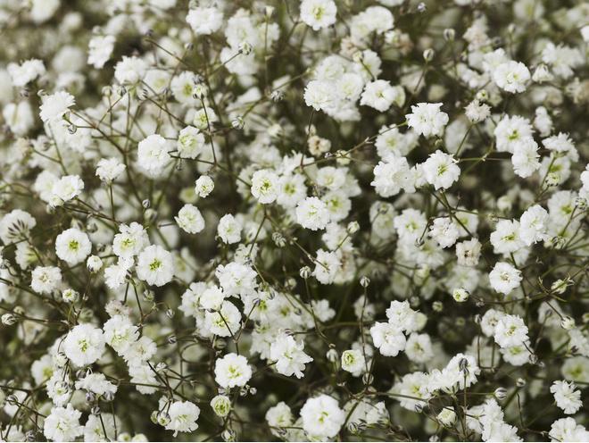 Цветущие многолетние цветы для дачи