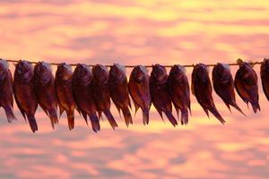 Как хранить вяленую рыбу в домашних условиях, чтобы она не пересохла - Woman s Day