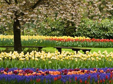 Цветники в городском парке