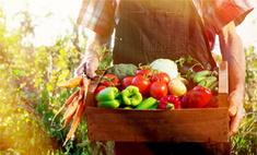 Инструкция: как защитить урожай от вредителей
