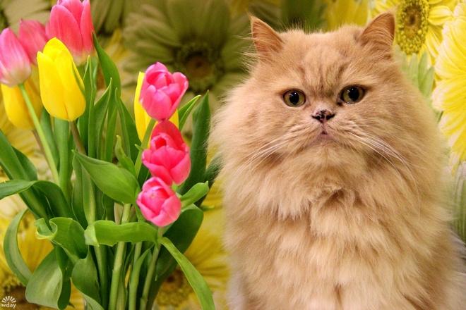 Рыжие коты в Международный день котов 1 марта