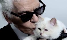Кошка Карла Лагерфельда может стать самым богатым животным в мире