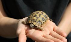 Домашние черепашки вредны для здоровья