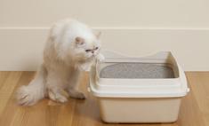 Почему кошка гадит и как ее отучить