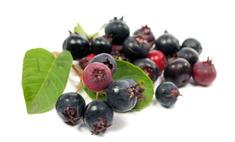 О пользе и вреде ягоды ирги