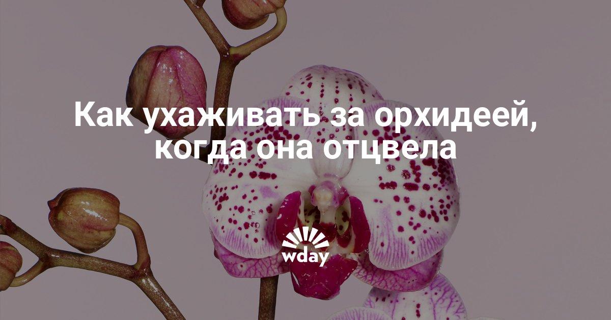 Уход как ухаживают за орхидеей